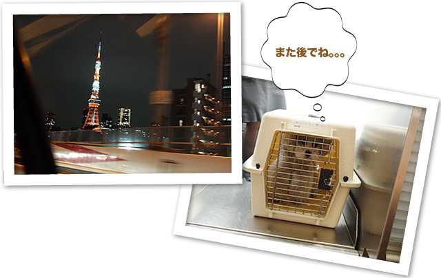 ファイル 503-5.jpg