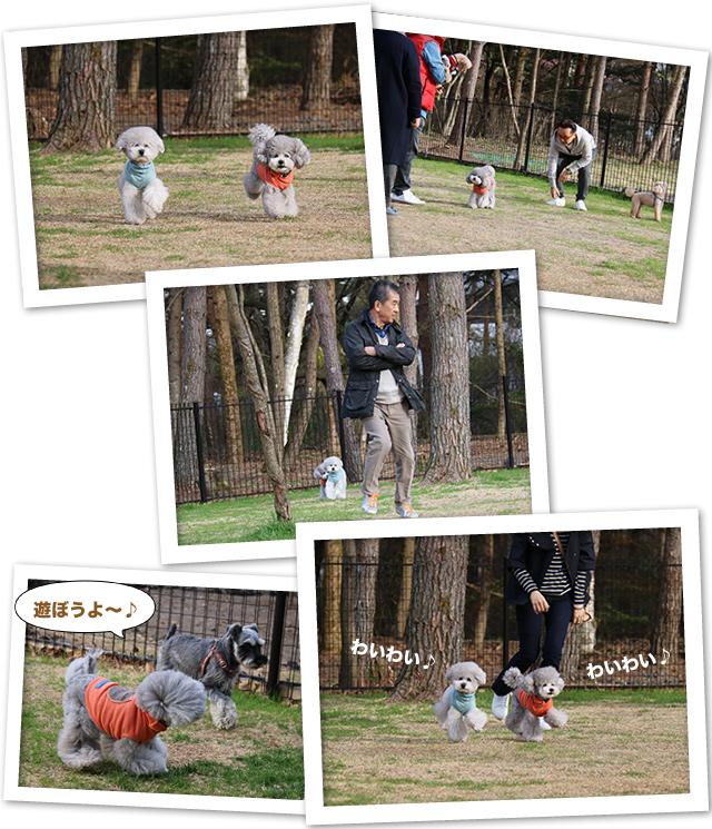ファイル 529-3.jpg