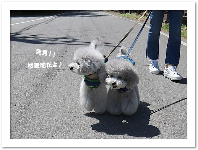 ファイル 531-3.jpg