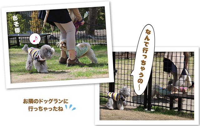 ファイル 533-4.jpg