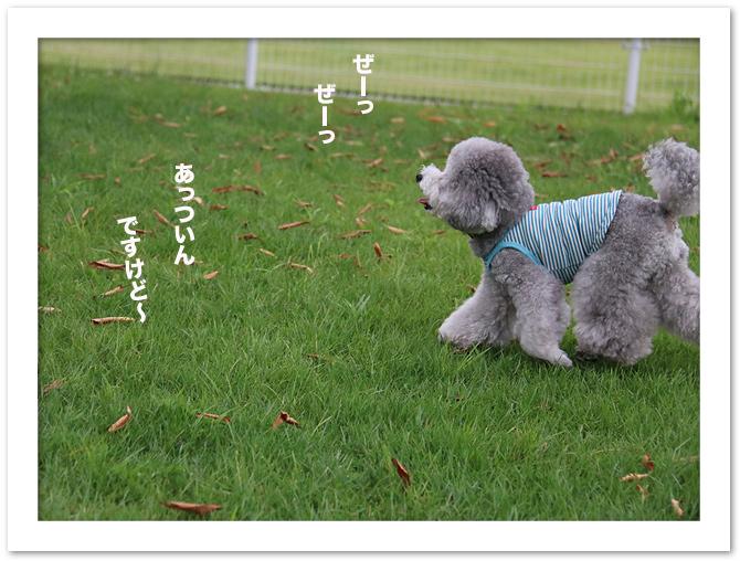 ファイル 543-5.jpg